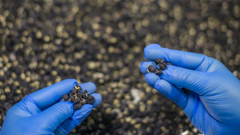 Black Goji Berries Certified Organic