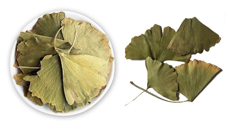 Bulk Organic Ginkgo leaf
