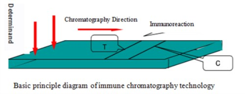 immunofluorescence assay analyzer