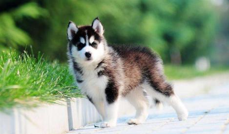 Common diseases for dogs