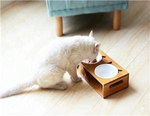 스테인레스 스틸 그릇 높이 고양이 그릇 제기 애완 동물 피더