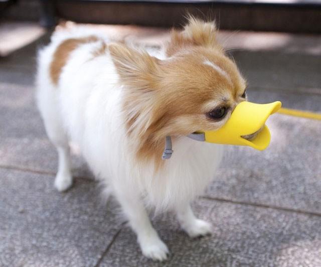 Dog Muzzle Manufacturers, Dog Muzzle Factory, Supply Dog Muzzle