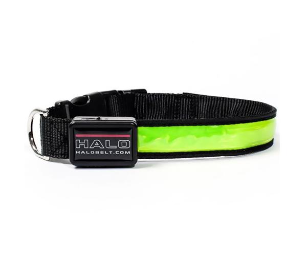 LEDdog Leashes Collar Manufacturers, LEDdog Leashes Collar Factory, Supply LEDdog Leashes Collar