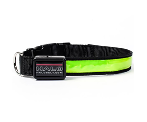 LEDdog Leashes Collar