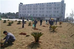 The first Tree Planting Activity