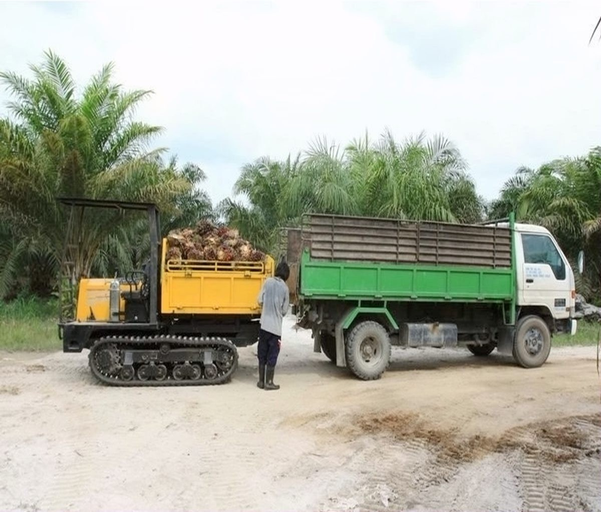 Beli  Palm Full Rubber Crawler Dumper,Palm Full Rubber Crawler Dumper Harga,Palm Full Rubber Crawler Dumper Merek,Palm Full Rubber Crawler Dumper Produsen,Palm Full Rubber Crawler Dumper Quotes,Palm Full Rubber Crawler Dumper Perusahaan,