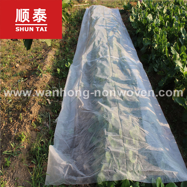 1.6m White Non Woven Fabric For Plant Protect / Weed Control Manufacturers, 1.6m White Non Woven Fabric For Plant Protect / Weed Control Factory, Supply 1.6m White Non Woven Fabric For Plant Protect / Weed Control
