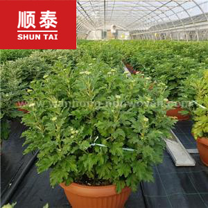 buy commercial weed control fabric, wholesale weed control roll, weed control membrane price
