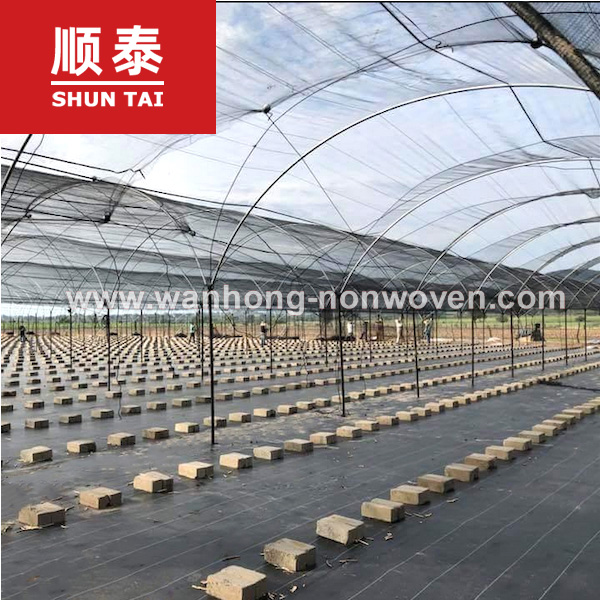 Agricultural Use PP Plastic Fabric Anti Grass Ground Cover Weed Control Mat Manufacturers, Agricultural Use PP Plastic Fabric Anti Grass Ground Cover Weed Control Mat Factory, Supply Agricultural Use PP Plastic Fabric Anti Grass Ground Cover Weed Control Mat