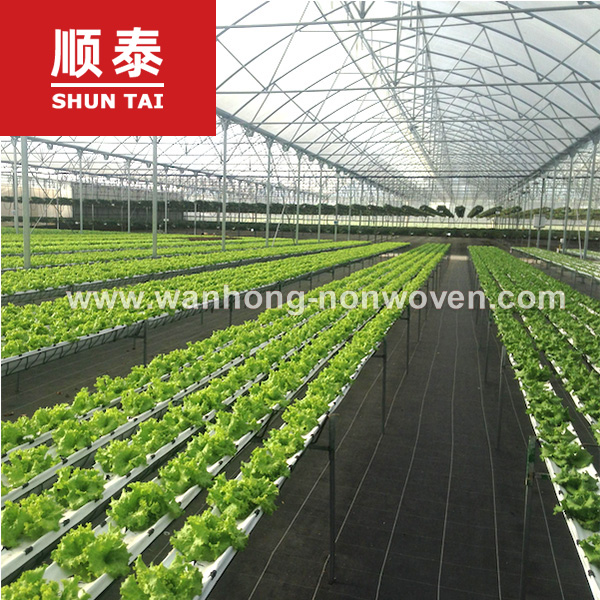 Weed Control Fabric 140gsm Non Woven Polypropylene Mulch Mat Fabric Manufacturers, Weed Control Fabric 140gsm Non Woven Polypropylene Mulch Mat Fabric Factory, Supply Weed Control Fabric 140gsm Non Woven Polypropylene Mulch Mat Fabric
