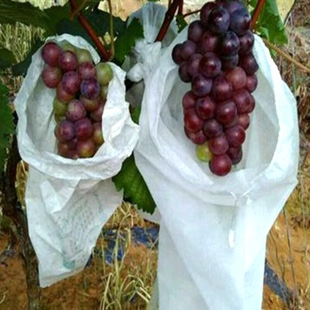 Agriculture disposable fruit bags non woven fabrics Manufacturers, Agriculture disposable fruit bags non woven fabrics Factory, Supply Agriculture disposable fruit bags non woven fabrics