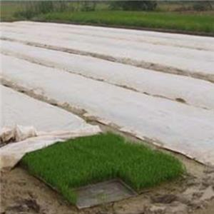 High-quality agricultural non-woven fabric