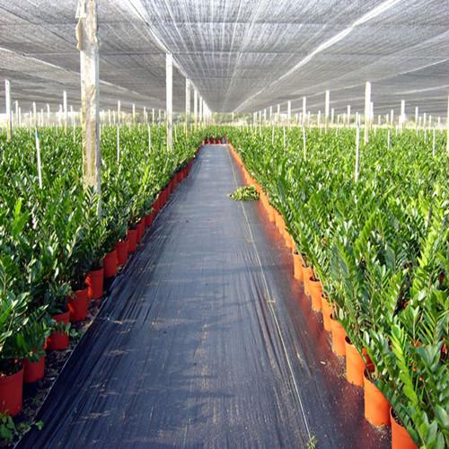 plastic weed control fabric