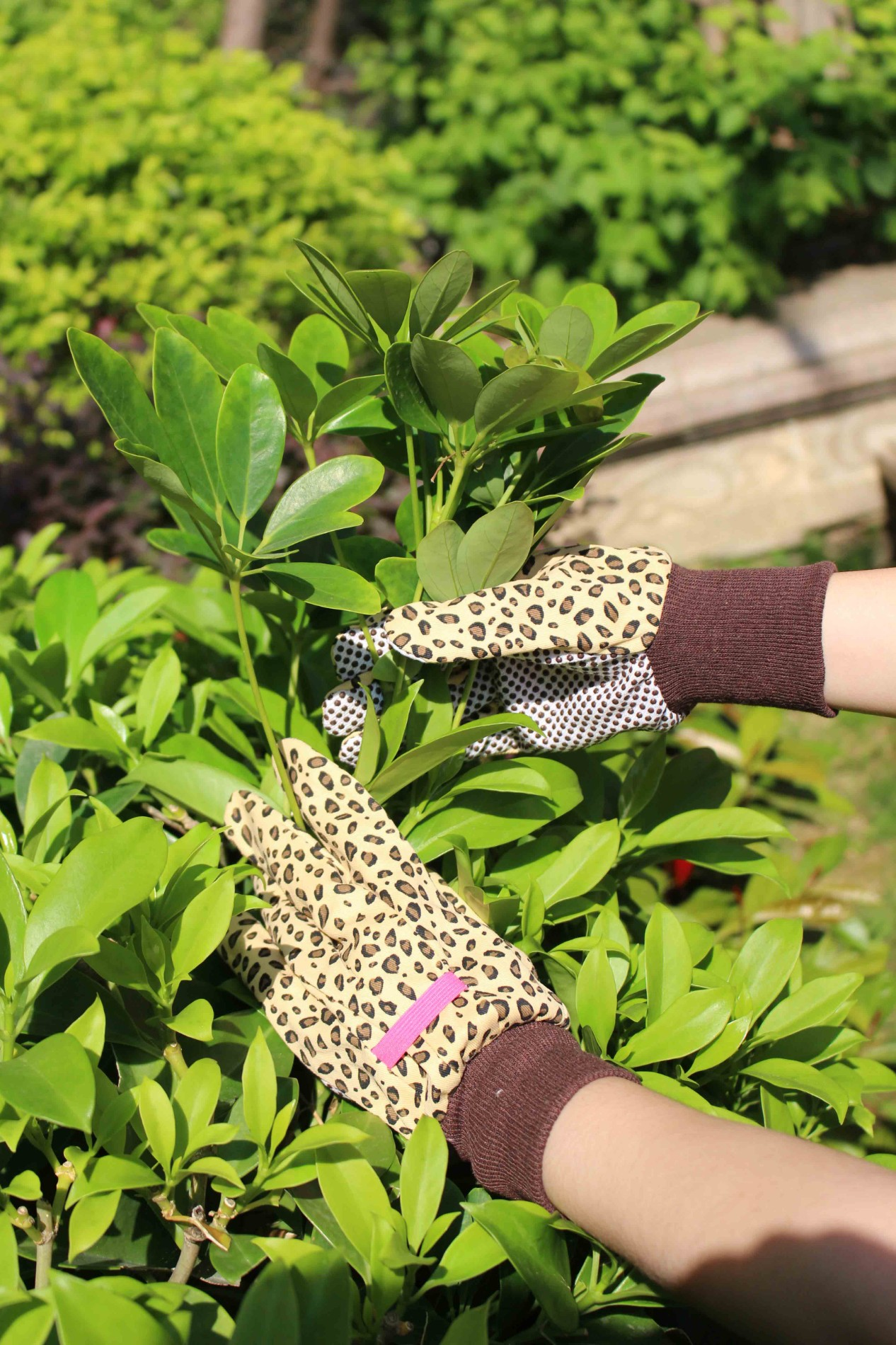Koop Leopard Garden Gloves. Leopard Garden Gloves Prijzen. Leopard Garden Gloves Brands. Leopard Garden Gloves Fabrikant. Leopard Garden Gloves Quotes. Leopard Garden Gloves Company.